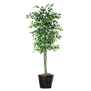 Vickerman 6-Feet Artificial Variegated Ficus Economy Tree in Decorative Container