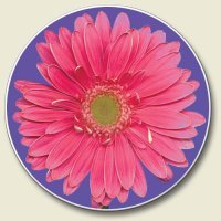 Pink Daisy Auto Coaster, Single Coaster for Your Car