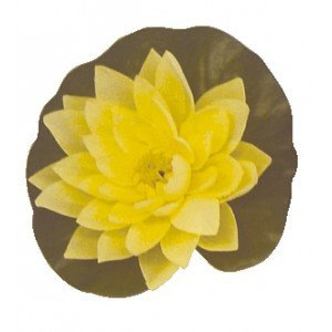 Bermuda Yellow Floating Lily