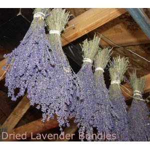Lavender Dried Bundles