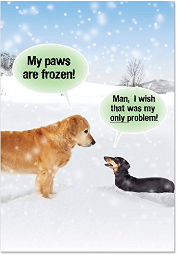 B5953 Box Set of 12 My Paws Are Frozen Humorous Christmas Paper Cards with Envelopes
