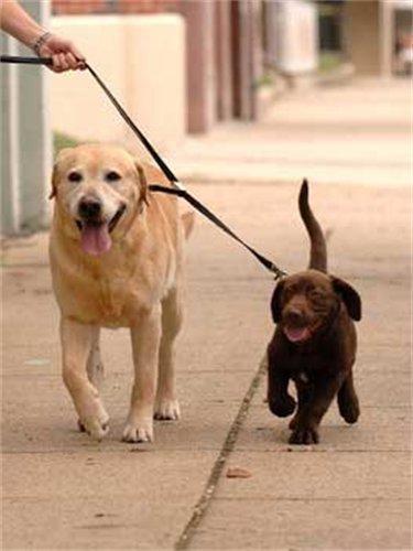 YUP! Double Dog Coupler,M-L, Black