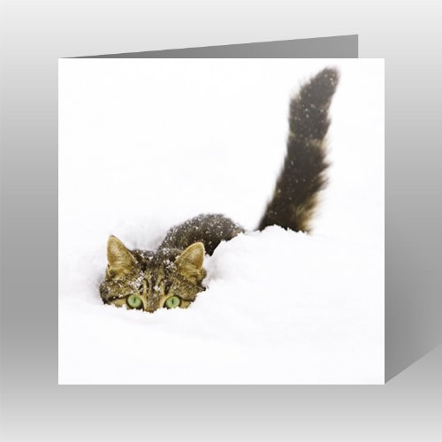Charity Christmas Cards - Pack Of 6 Cards - Cat in Snow (8353) - In Aid of the following Charities: Marie Curie Cancer Care, Age UK, MNDA, Tenovus, British Heart Foundation, NSPCC