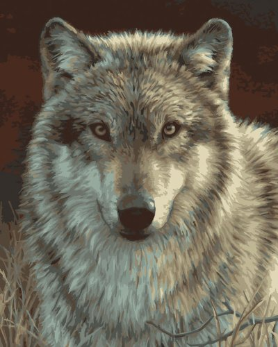 Bucilla 21678 Paint by Number, Gray Wolf