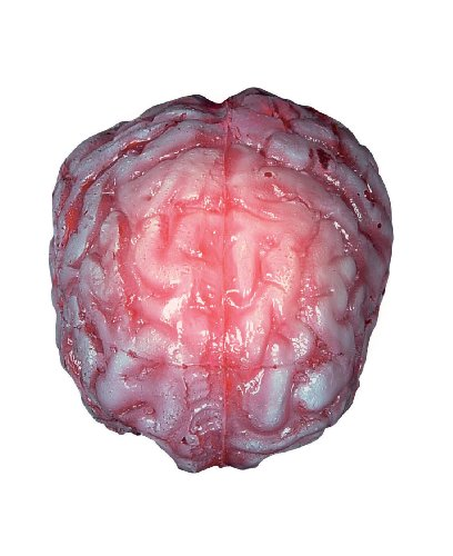 Seasons Color Changing Realistic Brain