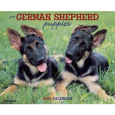German Shepherd Puppies - 2014 16-Month Calendar