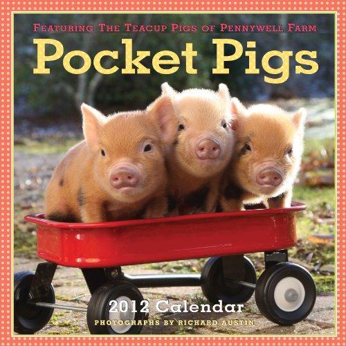 Pocket Pigs 2012 Calendar: The Teacup Pigs of Pennywell Farm