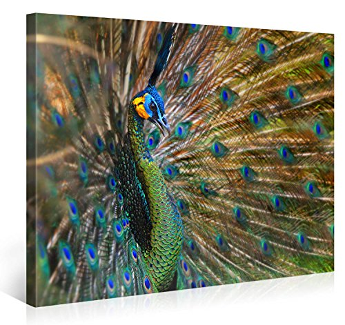 Stretched Canvas Print - PEACOCK BEAUTY Large Animal Wall Art e4160