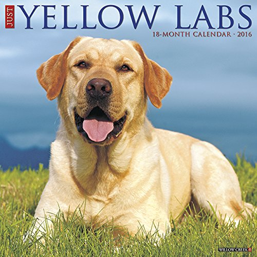 2016 Just Yellow Labs Wall Calendar